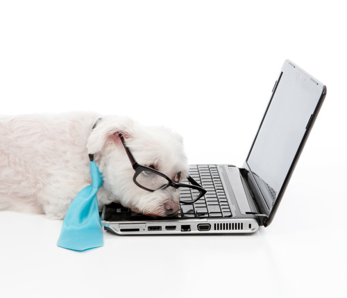 Puppy Sleeping on Computer