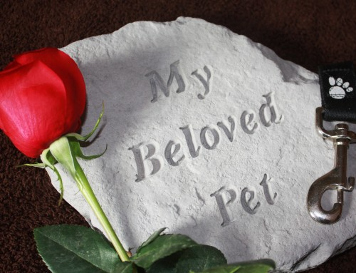 """""""How do we move on from the death of our beloved pet?"""""""