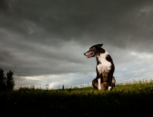 """Is there a way to prevent my dog from developing a fear of storms?"""